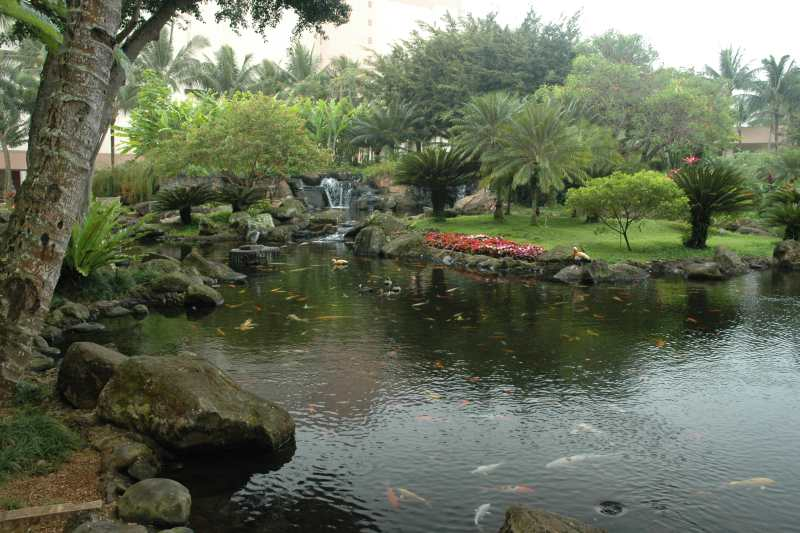Kauaii 2005 for Koi ponds near me